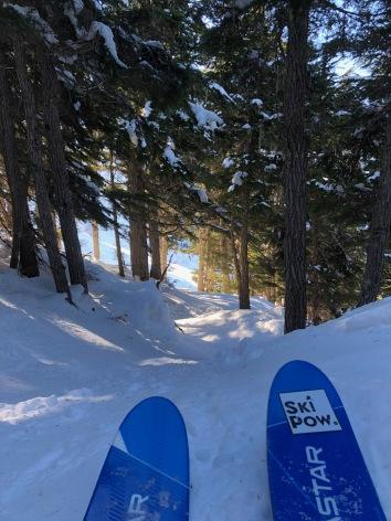 © Nicole Geils - Tree Skiing Alyeska